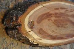 Schmuck aus Zwetschkenholz